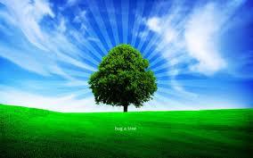 tree image1